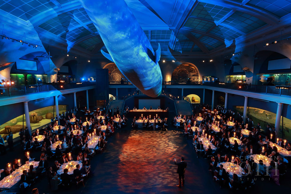 Loulie Walker Events: Museum of Natural History, NYC